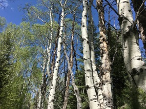 day at Great Basin National Park