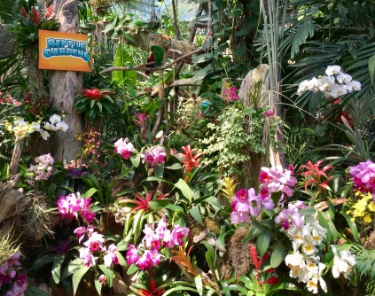 Beautiful orchids at the Reptile Gardens.