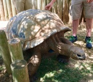 Up close and touching the giant tortoises