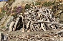 driftwood huts on moonstone beach