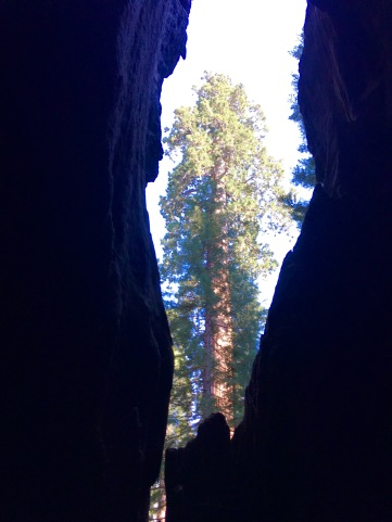 View from inside Chimney Tree