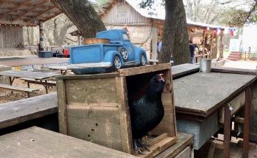 Beer Bar - aka chicken coop.