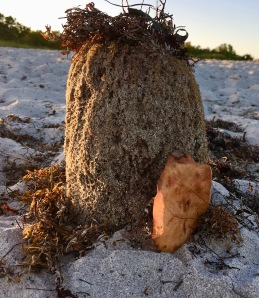 Impromptu Fairy house from a sea sponge