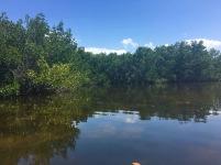 Weedon Island State Preserve